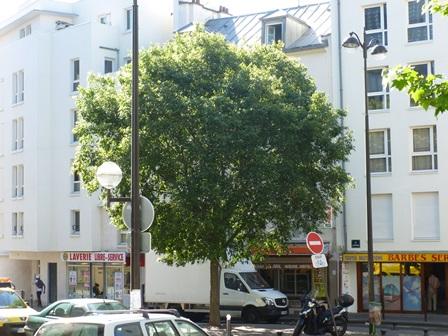 A la d couverte des arbres de la goutte d or micocoulier - Arbre provencal ...
